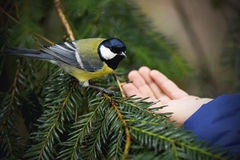 Feeding birds in the winter Stock Photography