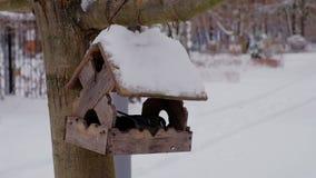 Feeding birds at winter season with wooden bird-feeder on tree. At winter stock video