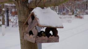 Feeding birds at winter season with wooden bird-feeder on tree. At winter stock footage