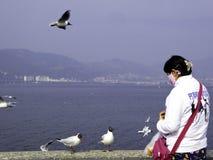 Feeding Black-headed Gulls Royalty Free Stock Photos