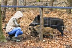 Feeding boars Royalty Free Stock Photos