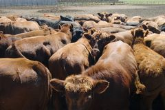Feeding Bunks Stock Images