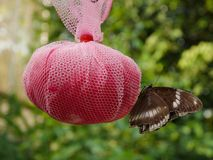 Feeding butterfly Stock Images