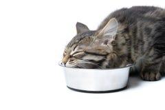 Feeding cat Stock Photos