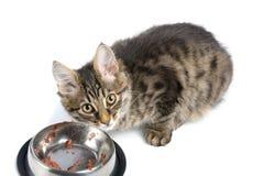 Feeding cat Royalty Free Stock Photography