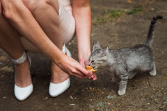 Feeding cat Royalty Free Stock Photos