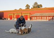 Feeding Cats royalty free stock photos