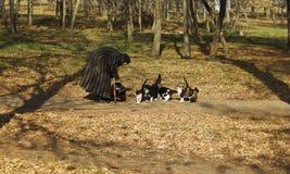 Feeding cats Royalty Free Stock Image