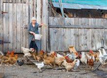 Feeding chickens on a farm Stock Photography