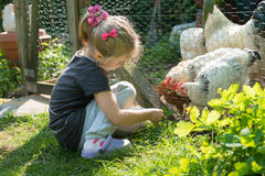 Feeding chickens. Little girl feeding chickens in a chicken coop and has fun Stock Photos