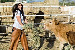 Feeding the cows. A beautiful cowgirl feeds hay to the cows stock images
