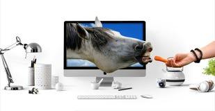 Feeding  A Cyber Horse