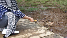 Feeding a deer on a dirt Stock Photography