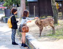Feeding deer in Nara, Japan 2 Stock Photo