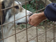 Feeding a dog. Hand feeding a hungry dog Royalty Free Stock Photography