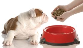 Feeding the dog Royalty Free Stock Image