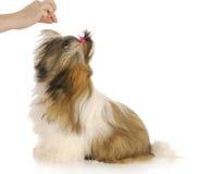 Feeding dog Stock Images
