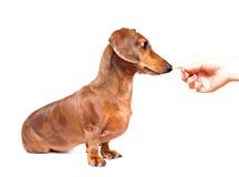 Feeding dog Stock Photography