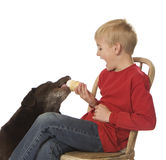 Feeding the Dog. Little boy and dog sharing an ice cream cone Stock Photo