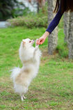 Feeding dog Royalty Free Stock Photography