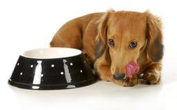 Feeding the dog Stock Images