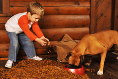 Feeding the Dog Stock Photos