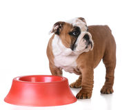 Feeding the dog Stock Photography