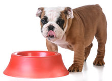 Feeding the dog Royalty Free Stock Images