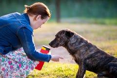 Feeding dog. Woman feeding dark dog outdoors Royalty Free Stock Photography