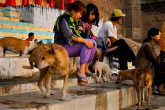 Feeding Dogs Stock Images