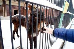 Feeding donkey Stock Image