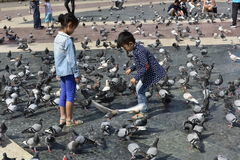 Feeding the Doves, Barcelona, Spain Stock Photos
