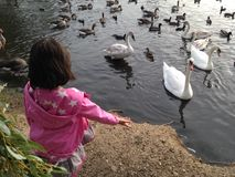 Feeding the duck in pink Royalty Free Stock Photography