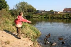 Feeding ducks royalty free stock image