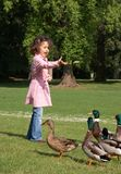 Feeding ducks Stock Photos