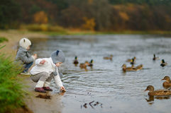 Feeding ducks at autumn Stock Images
