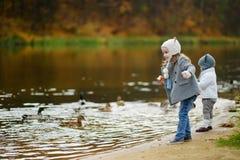 Feeding ducks at autumn Stock Photo