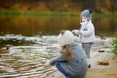 Feeding ducks at autumn Royalty Free Stock Image