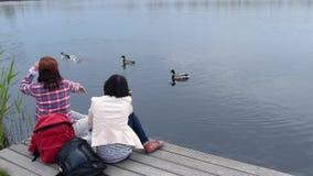 Feeding Ducks stock footage