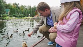Feeding the ducks in the lake. Father and daughter are fed ducks in a city park by the lake stock video footage