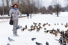 Feeding the ducks left for the winter at the creek. In the city of St. Petersburg, Russia Royalty Free Stock Photo
