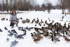 Feeding the ducks left for the winter at the creek. In the city of St. Petersburg, Russia Stock Photos