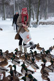 Feeding the ducks left for the winter at the creek. In the city of St. Petersburg, Russia Stock Images