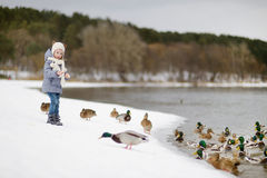 Feeding ducks at winter. Little girl feeding ducks at winter royalty free stock photo