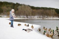 Feeding ducks at winter Royalty Free Stock Photo