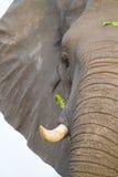 Feeding elephant Stock Photo