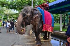 Feeding the elephants Stock Photos