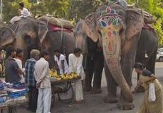 Feeding the elephants Royalty Free Stock Photos