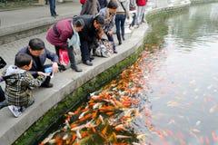 feeding fish Stock Image