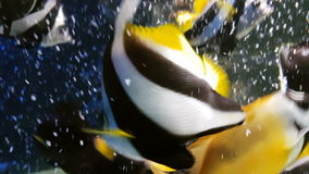 Feeding fish in decorated Marine Aquarium stock footage video stock footage